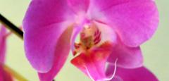 home-fiore-dona