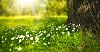 meditazione guidata e rilssamentoofficinalis