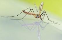 terapie oncologiche e zanzare