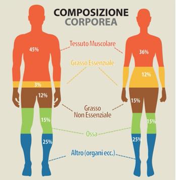 sarcopenia diagnosi composizione corporea
